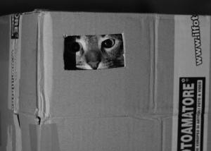 ¿Sueñan los espías con gatos eléctricos?