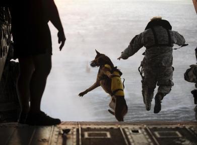 Perro de las Fuerzas Especiales