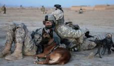 Perro y su manejadora en Afganistán