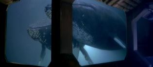 Las ballenas en un tanque a bordo de la nave
