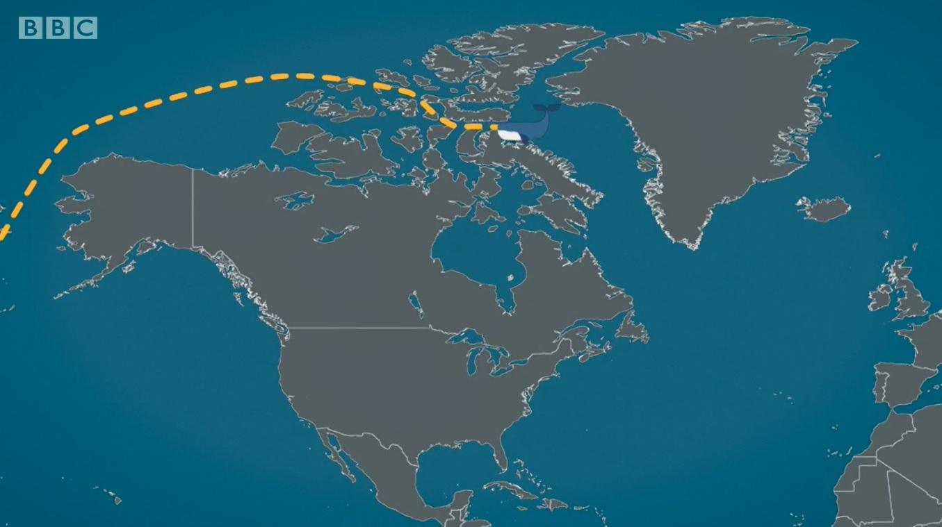 Recorrido de Wally por el Círculo Ártico